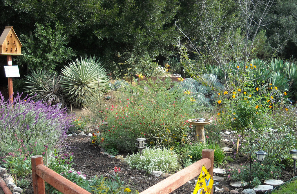 Wild Backyard Garden : Wild Animal Sanctuary ? Create Backyard Habitat  Effective Wildlife