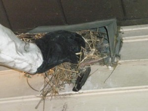 nesting material in duct