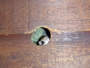 Flying Squirrels In Your Attic Effective Wildlife Solutions