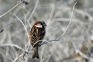 Sparrows in Your House and Don't Know What to Do?