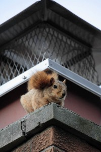 squirrel on a chimney