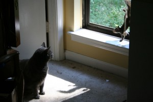 cat and gray squirrel