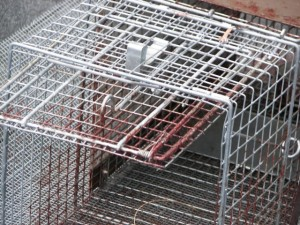 Havahart Traps and Other Live-catch Wildlife Traps