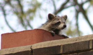 How to Keep Wildlife Out this Winter