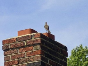bird on chimney flue