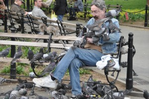 Looking to Get Rid of Pigeons?