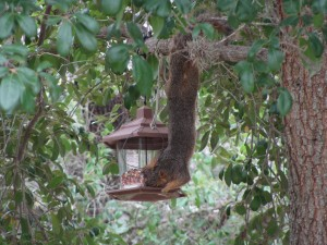 Finding a Squirrel Deterrent for Bird Feeders