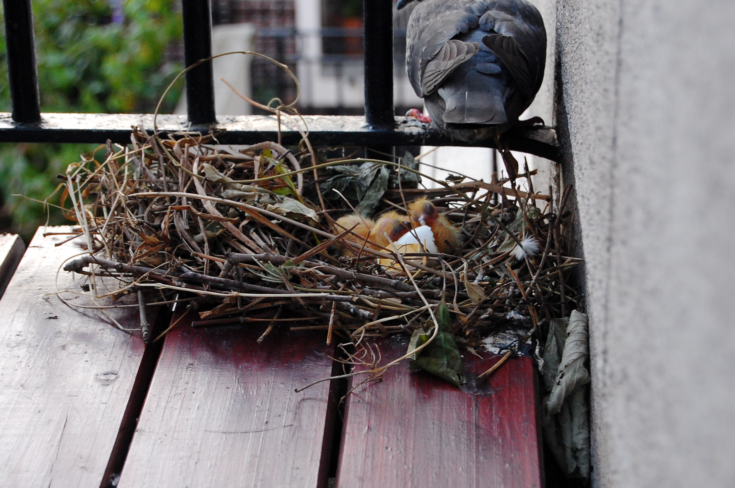 Looking To Get Rid Of Pigeons Effective Wildlife Solutions