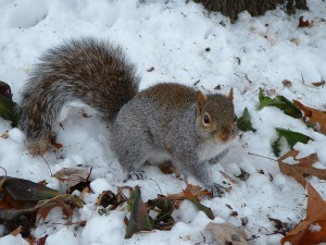 Snow Bunny… Snowbird…  Snow Squirrel?