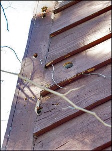 Woodpecker Damaged Siding