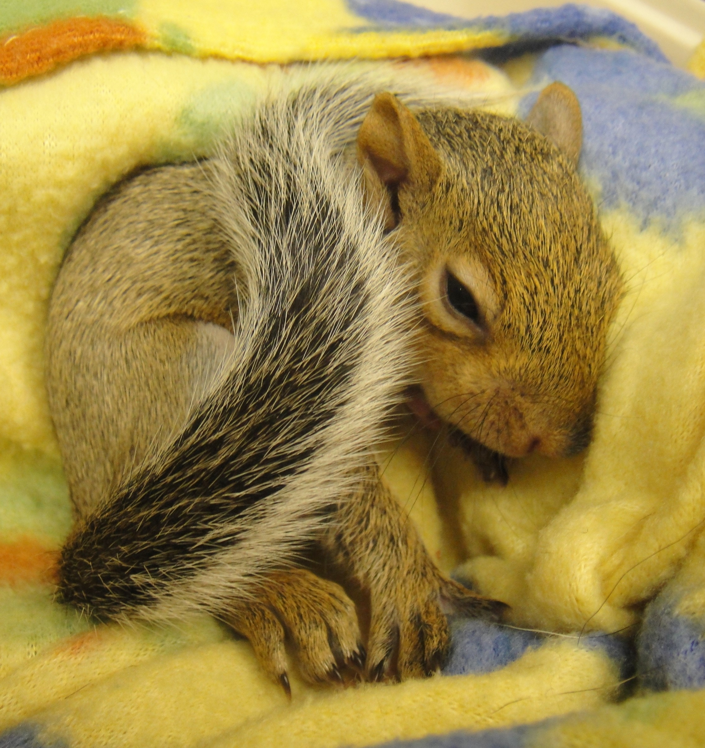 Watch How to Attract Squirrels video