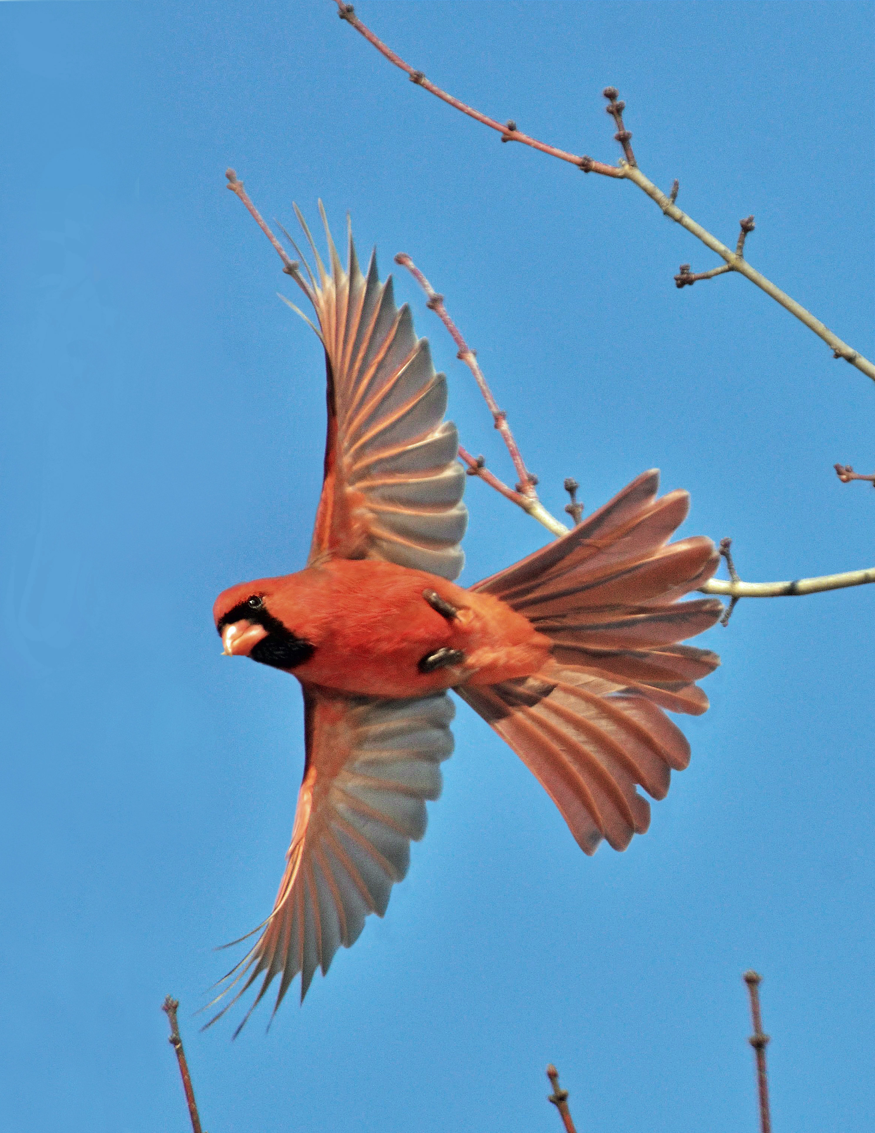 Prevent Birds Flying into Windows - Effective Wildlife Solutions