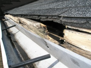 This damaged trim board would have been discovered before the squirrel got in if a regular inspection of what the gutter was performed.