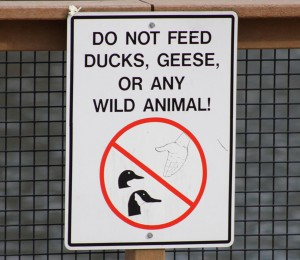 do not feed signs