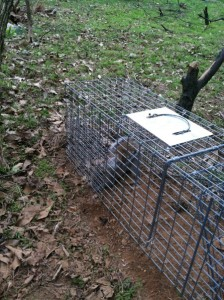 Trapping and removing animals is not an effective, long-term solution to wildlife conflicts.