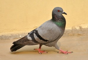 Pigeons: Keeping Them Away