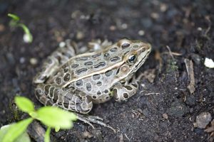 How to Welcome a Frog to the Backyard