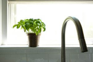 basil to get rid of bugs in the kitchen