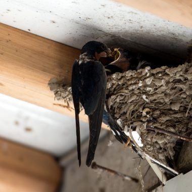 Try These Amazing Tricks for Bird Nest Prevention