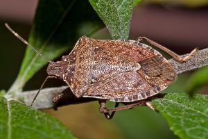 Interesting Facts We Bet You Never Knew About Stink Bug Bites