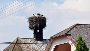bird nest prevention
