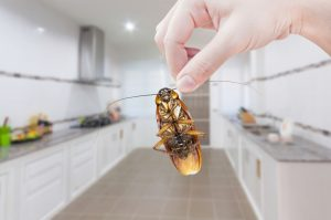 5 Super Easy Ways to Handle Bugs in the Kitchen