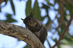 Flying Squirrel on the tree